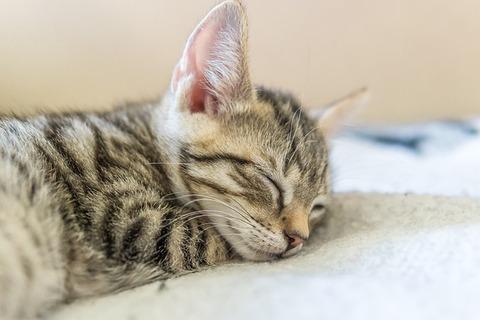 cat-4546381_640