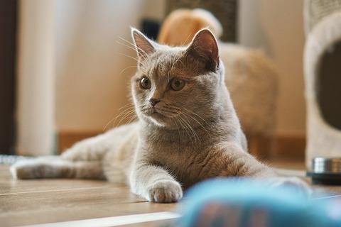 cat-4562204_640 (1)