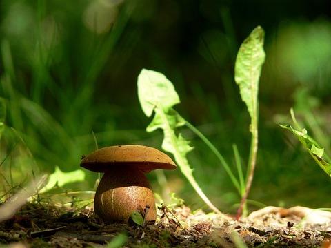 mushroom-3619883_640