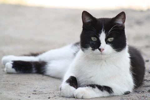 cat-179611_640