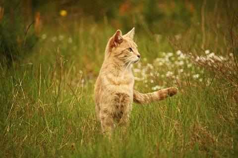 cat-2317973_640