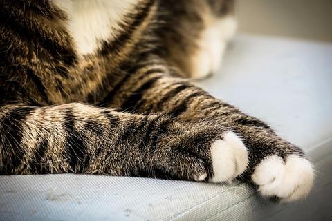 cat-3628570_640