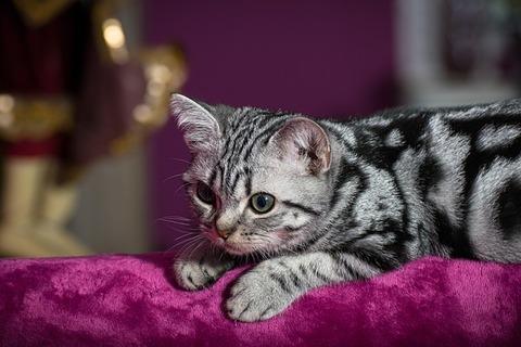 kitten-4259786_640