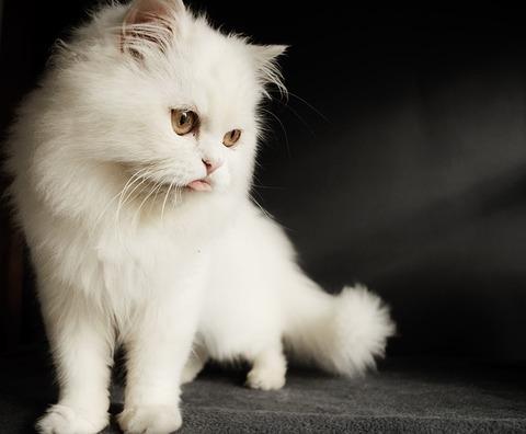 cat-3197421_640