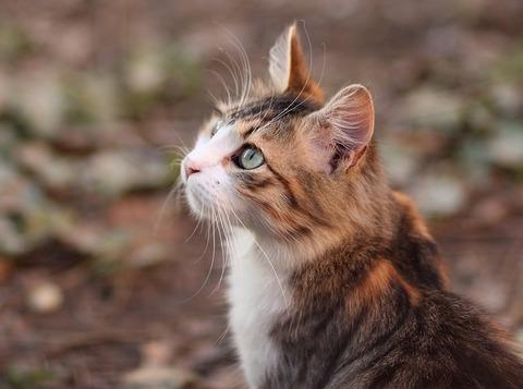 cat-3280527_640 (2)