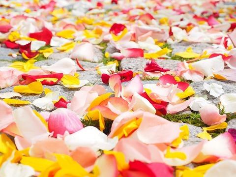 rose-petals-693570_640
