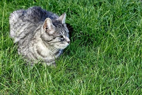 cat-4335426_640