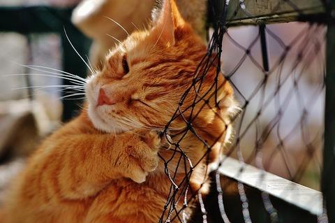 cat-1310787_640
