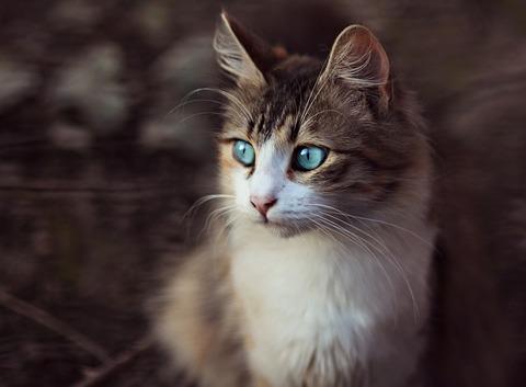 cat-3979262_640