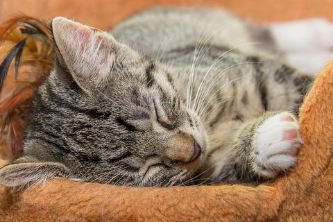 cat-4083452_640