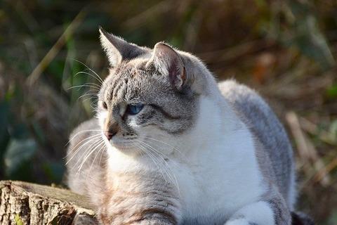 cat-5543606_640