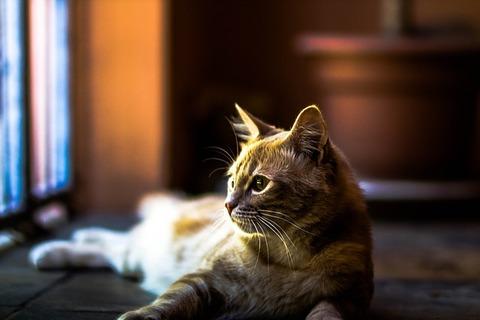cat-140305_640