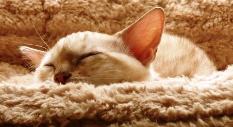 cat-138983_640