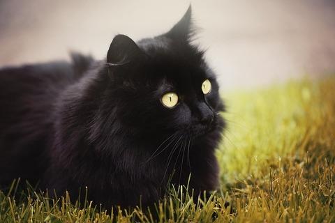 cat-827507_640