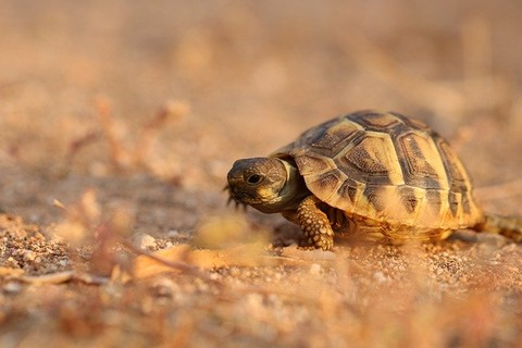 turtle-5201848_640