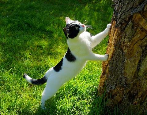 cat-1365643_640