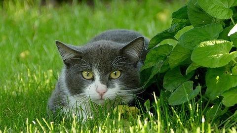 cat-3189270_640