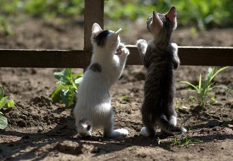 cats-4321163_640 (1)