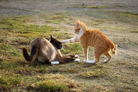 cat-1184762_640