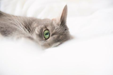 cat-4240963_640