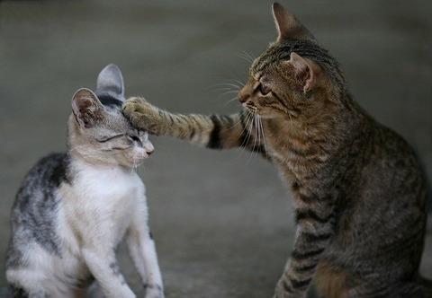 cat-3737295_640 (1)