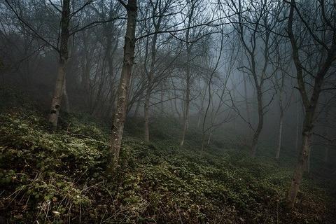 foggy-4660940_640