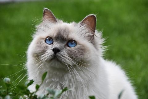 cat-3526645_640