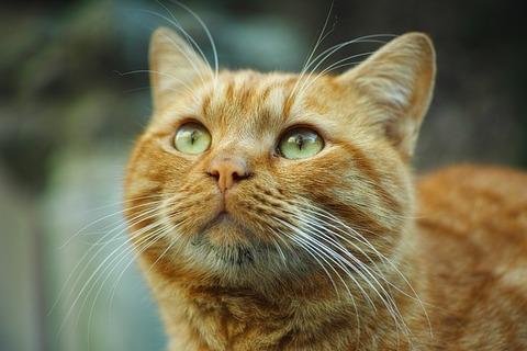 cat-2314325_640