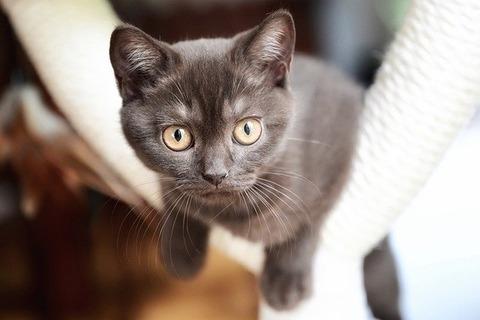 cat-5319008_640 (2)