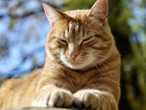 cat-2838801_640