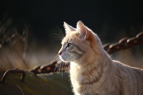 cat-1183086_640
