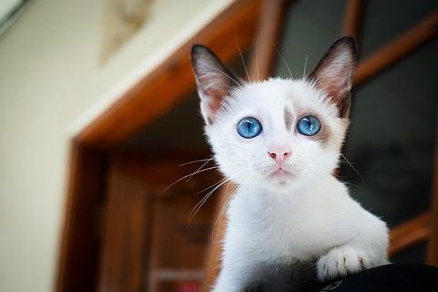 kitten-1866475_640