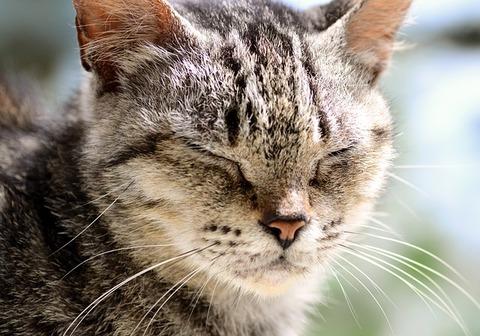 cat-3851112_640