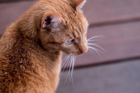 cat-3448738_640