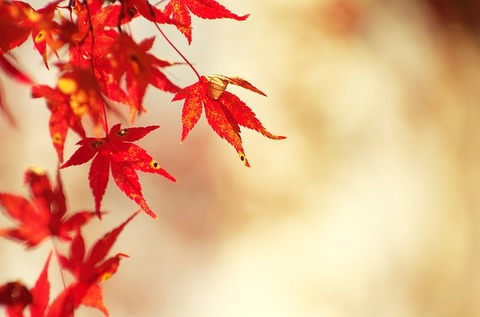 autumnal-leaves-1280026_640