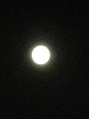 2012-08-31 20:48:31 写真1