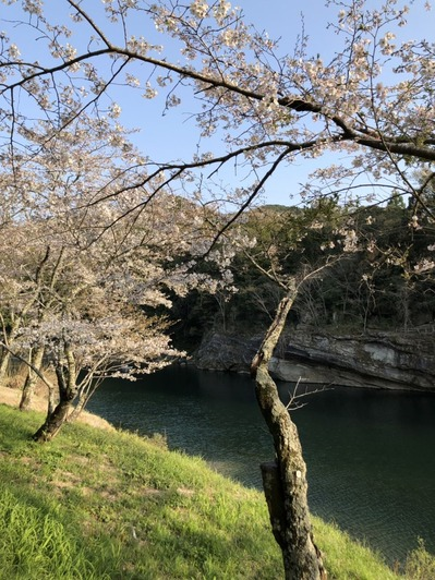 20190406 new castle city sakurabuchi park (2)