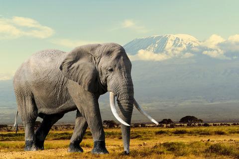 ゾウ-移動距離