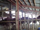オーストリッチ牧場