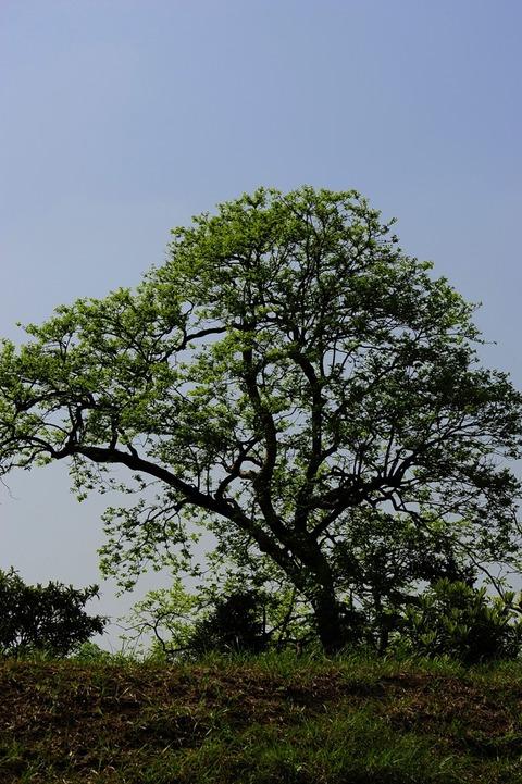 樹木_DSC0830