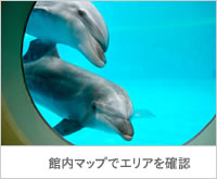 img_areaguide_dolphin