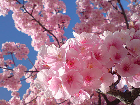 桜_1_~1