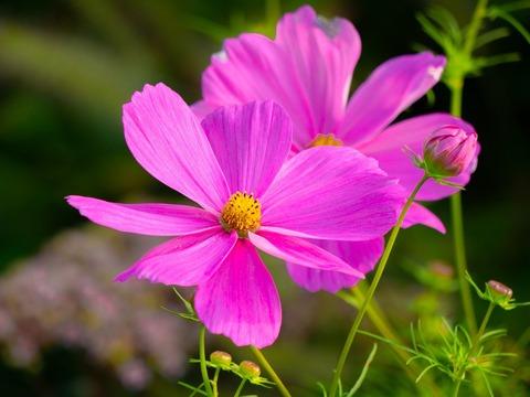 flowers-3680485_1280