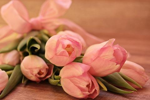 tulips-2068649_1280