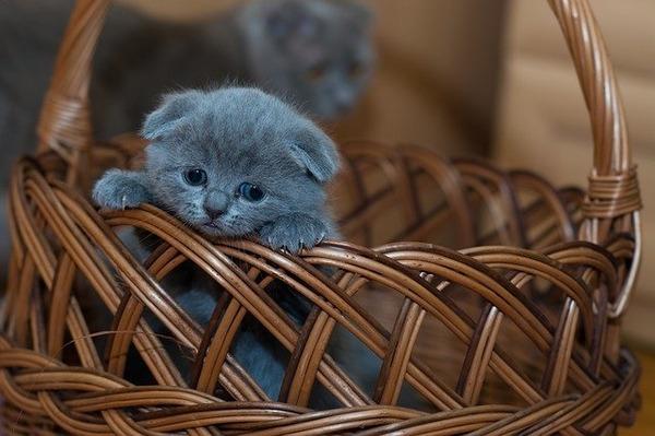 kitten-1845789_640