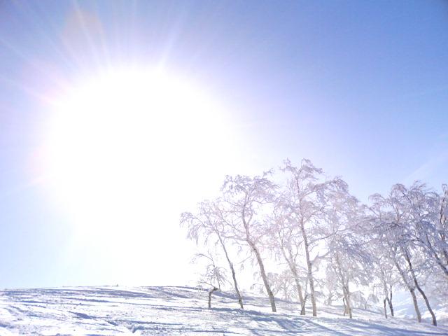 ルスツ山頂 -太陽と木-