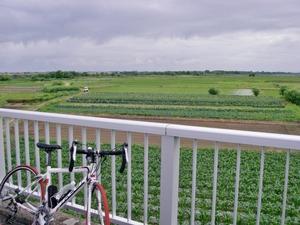 雨雲とトウモロコシ畑