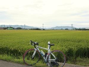 亀田の田んぼ