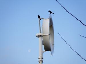 風力発電機の風車とカラス