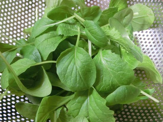 leaf008